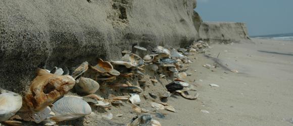 http://hotelcapecharles.com/wp/wp-content/uploads/2013/06/barrier-island-shells_580x250.png